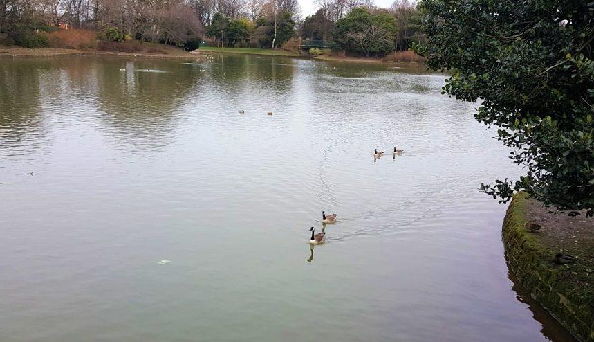 حديقة ستانلي في انجلترا ليفربول