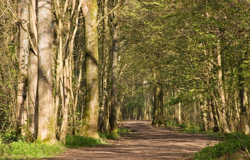 حديقة ستانمر برايتون بريطانيا