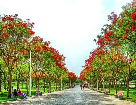 تعد حديقة زعبيل من اجمل حدائق دبي ، حيث تحتضن مركز للتكنولوجيا والرياضة والعديد من المرافق المتنوعة مما جعلها احدى افضل الاماكن السياحية في دبي