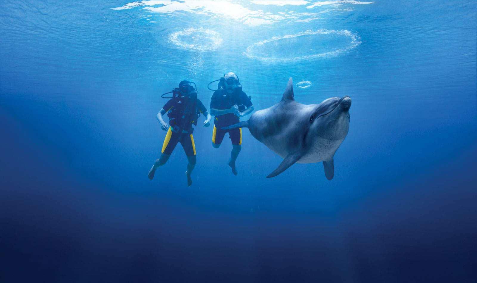 الغوص مع الدلافين في دبي سياحة يعد من اجمل الانشطة السياحية في دبي - مناظر دبي