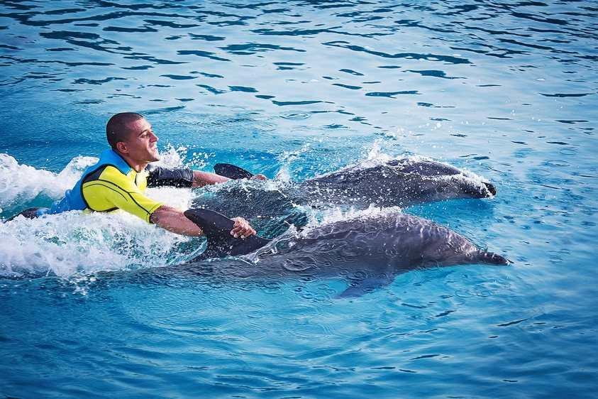 خليج الدلافين في فندق اتلاتنس دبي