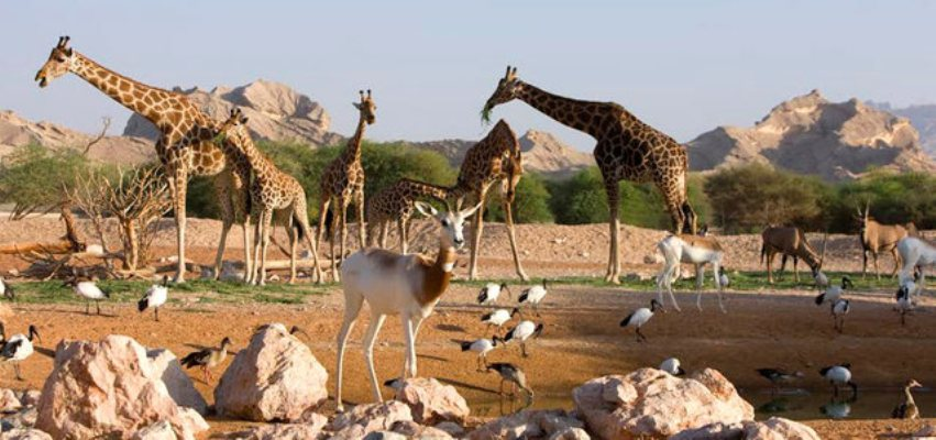 حديقة حيوانات  الاماكن السياحية في دبي الامارات