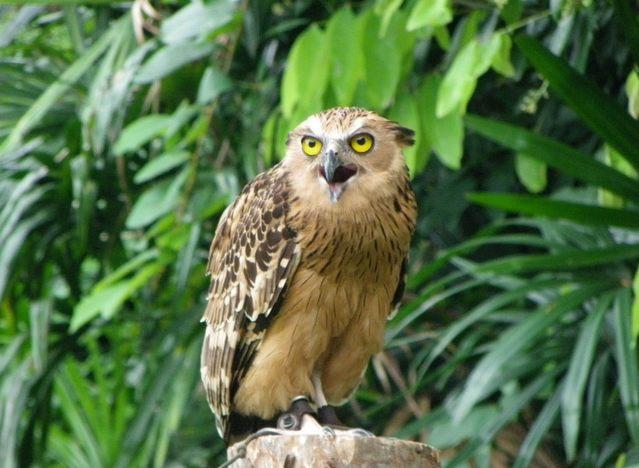 طيور جارحة في منتزه يورونغ سنغافورة