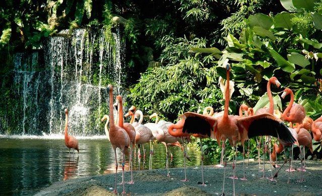بحيرة الفلامينغو في حديقة يورونغ