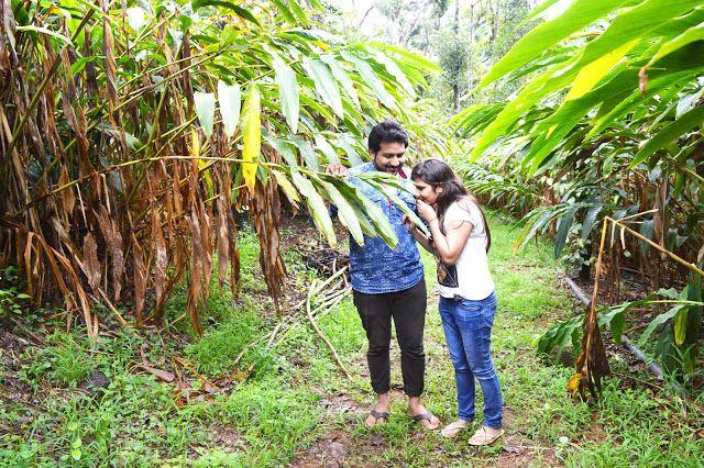 حديقة التوابل في تيكادي