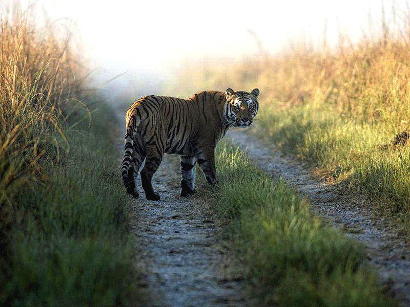 محمية النمر في تيكادي كيرلا