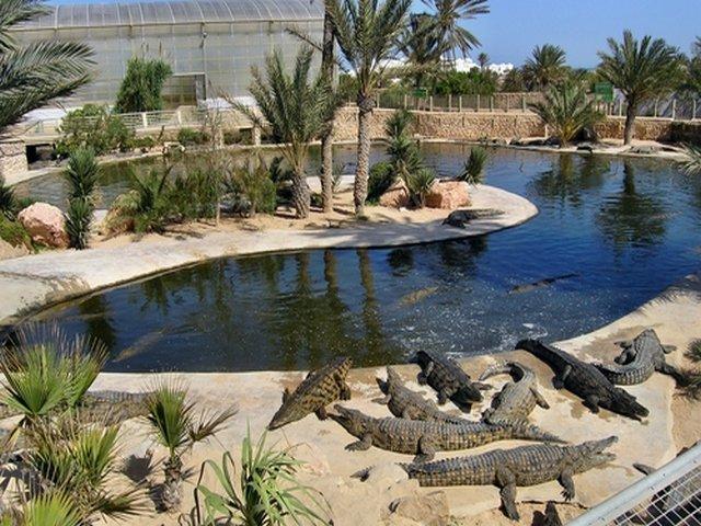 حديقة التماسيح من افضل الحدائق في دبي