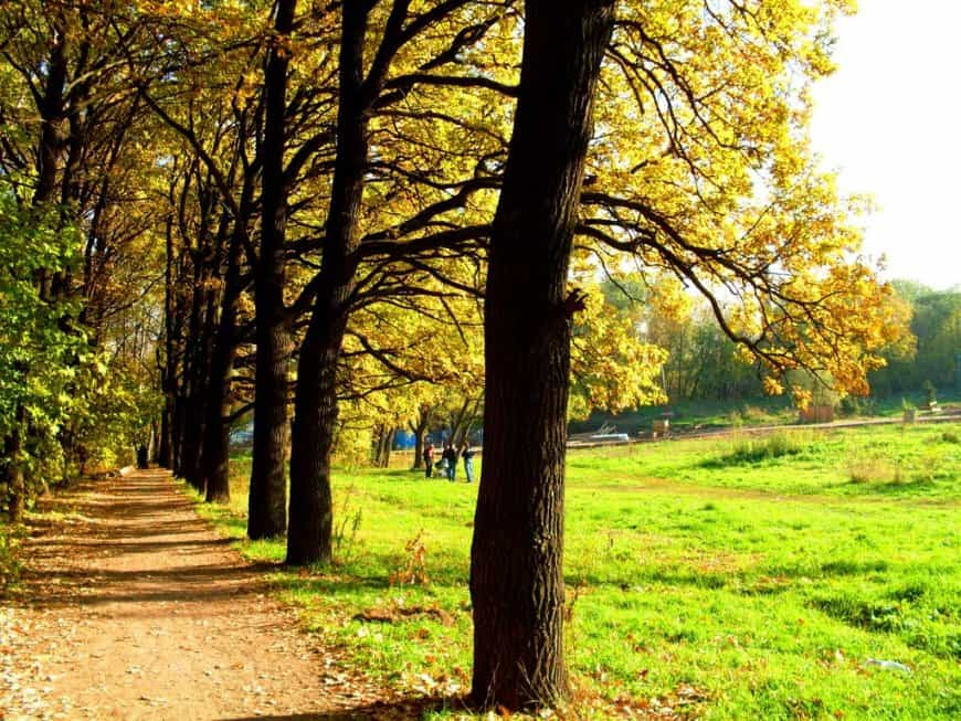 حديقة لوزيني في موسكو