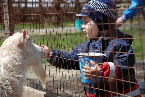 حديقة حيوان موسكو