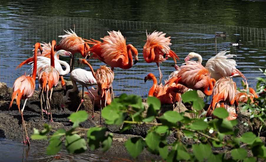 حديقة حيوان موسكو من افضل حدائق موسكو