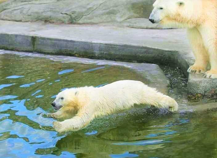 حديقة حيوان موسكو من افضل الاماكن السياحية في موسكو