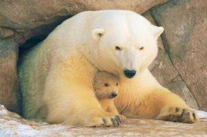 تعرف في المقال على افضل الانشطة السياحية في حديقة حيوان موسكو ، بالإضافة الى افضل فنادق موسكو القريبة منها