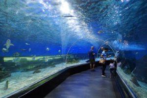 تعرف في المقال على افضل الانشطة السياحية في حديقة المحيط في مانيلا ، بالإضافة الى افضل فنادق مانيلا القريبة منها
