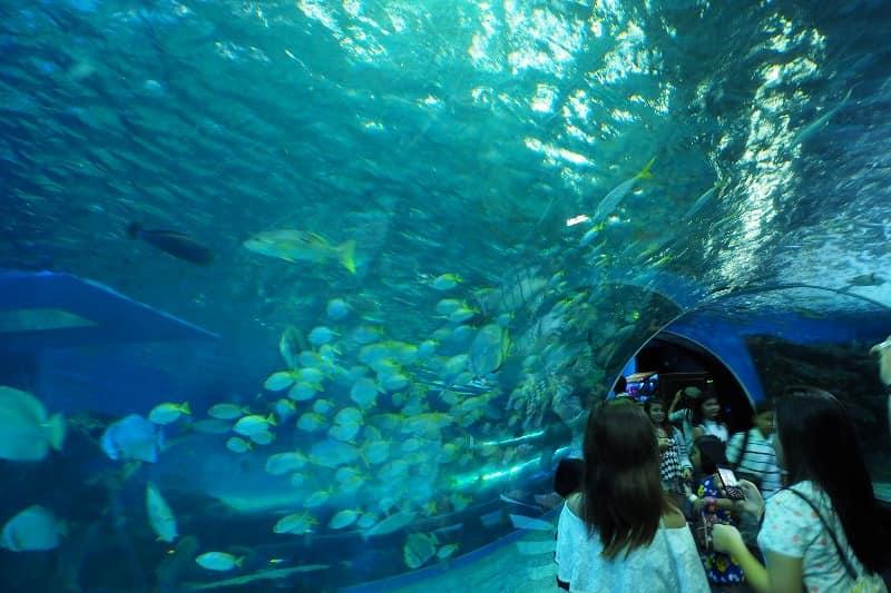 حديقة المحيط في مانيلا الفلبين
