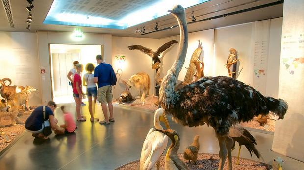 المتحف الوطني للتاريخ الطبيعي من افضل الاماكن السياحية في واشنطن دي سي