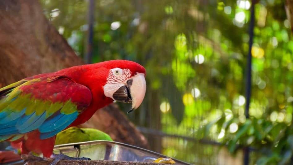 حديقة الحيوان الوطنية من افضل الاماكن السياحية في كولومبو سريلانكا
