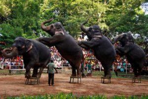 تعرف في المقال على افضل الانشطة السياحية في حديقة الحيوان الوطنية كولومبو ، بالإضافة الى افضل فنادق كولومبو القريبة منها