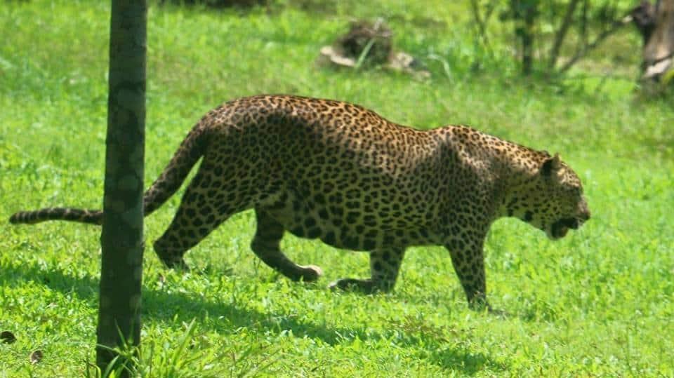 حديقة الحيوان الوطنية من اجمل اماكن السياحة في كولومبو