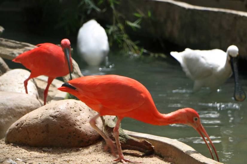 حديقة الحيوان الوطنية في مدينة كولومبو سريلانكا