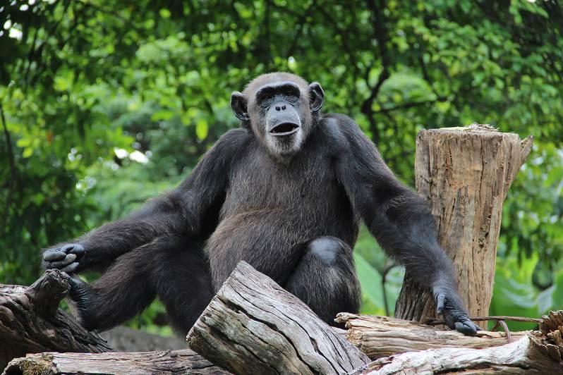 حديقة الحيوان الوطنية في سريلانكا