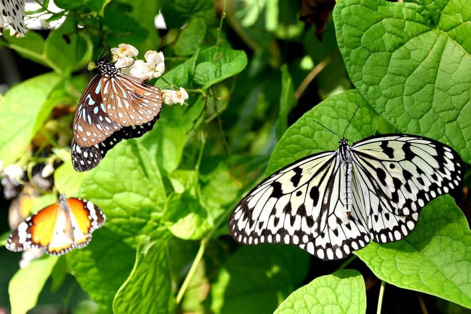 حديقة الحيوان الوطنية كولومبو من افضل اماكن السياحة في سريلانكا
