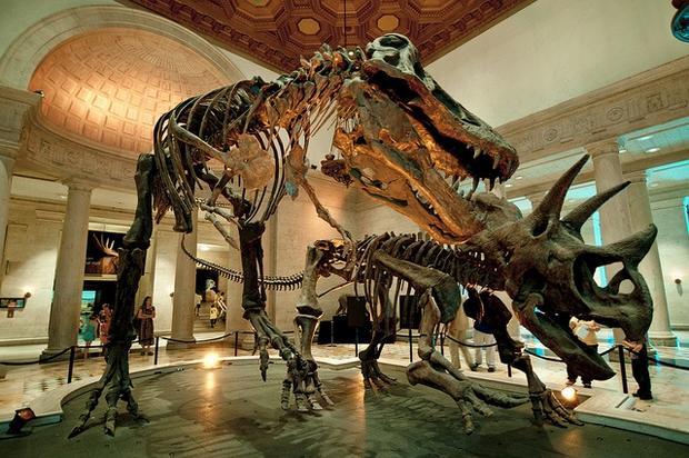 متحف التاريخ الطبيعي في لوس انجلوس