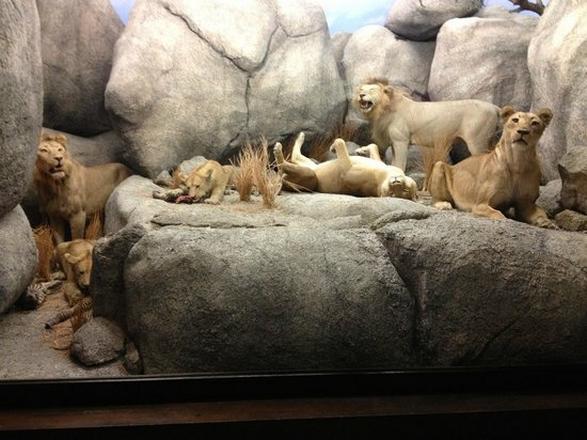 متحف التاريخ الطبيعي لوس انجلوس