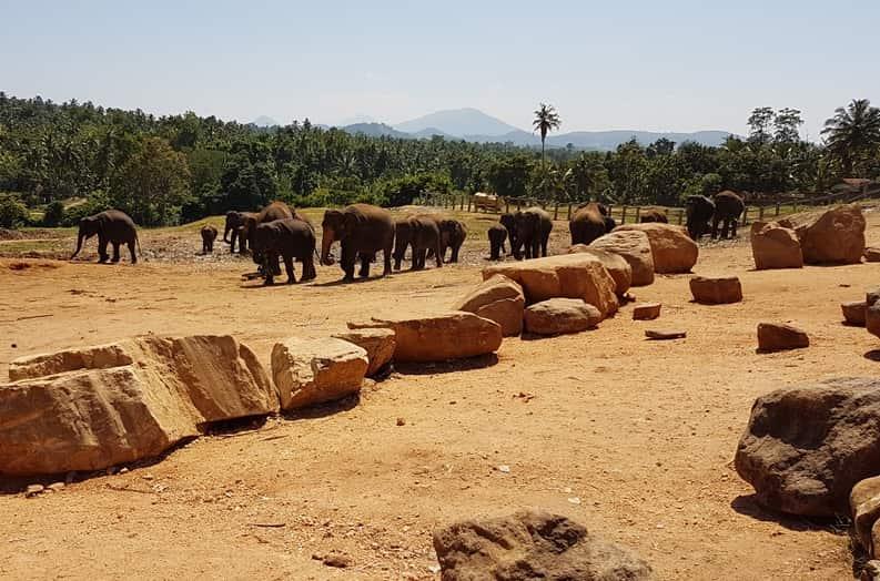 ميتم الفيلة في كاندي