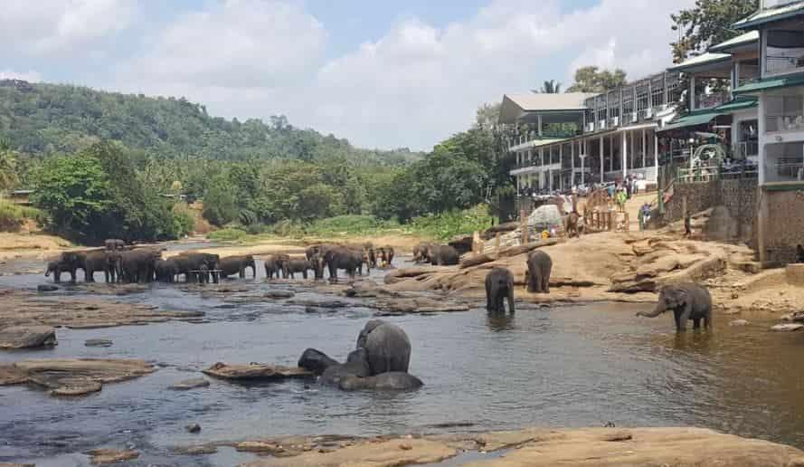 ميتم الفيلة في كاندي - السياحة في كاندي