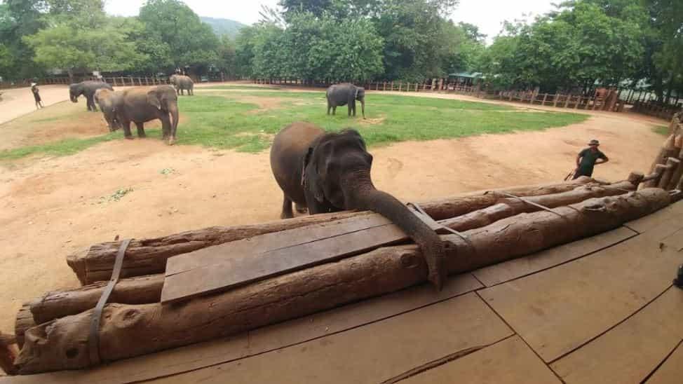 ميتم الفيلة من اجمل اماكن السياحة في كاندي