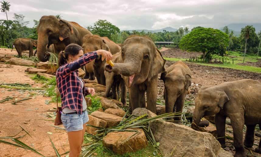 حديقة الفيلة في كاندي