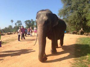 تعرف في المقال على افضل الانشطة السياحية في ميتم الفيلة في كاندي بيناولا ، بالإضافة الى افضل فنادق كاندي القريبة منه