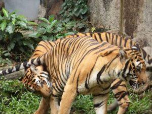 تعرف في المقال على افضل الانشطة السياحية في حديقة حيوان مانيلا ، بالإضافة الى افضل فنادق مانيلا القريبة منها