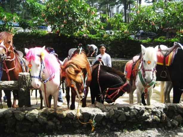 حديقة حيوان مانيلا من افضل الاماكن السياحية في مانيلا الفلبين