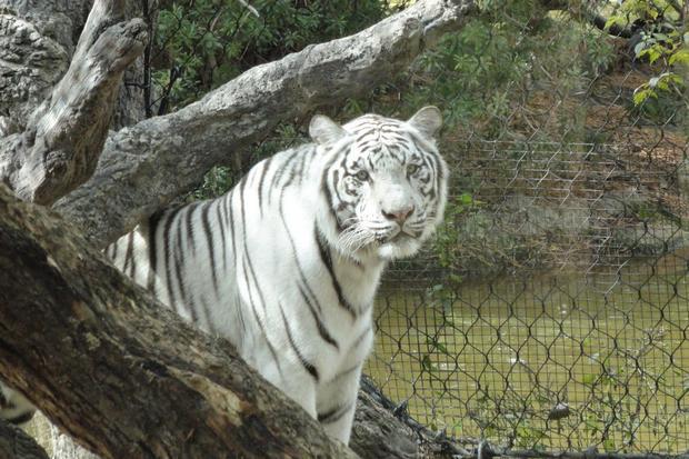 حديقة الحيوان الوطنية في واشنطن امريكا