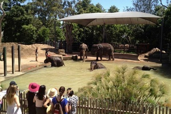 حديقة حيوانات ملبورن من اجمل اماكن السياحة في ملبورن استراليا