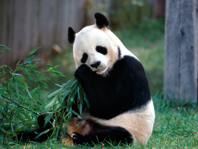 حديقة حيوان بكين من اشهر اماكن سياحية في بكين الصين