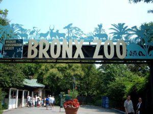 تعرف في المقال على افضل الانشطة السياحية في حديقة حيوانات برونكس نيويورك ، بالإضافة الى افضل فنادق نيويورك القريبة منها