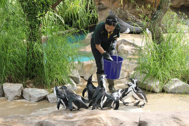 حديقة حيوانات برونكس من اشهر اماكن السياحة في نيويورك امريكا