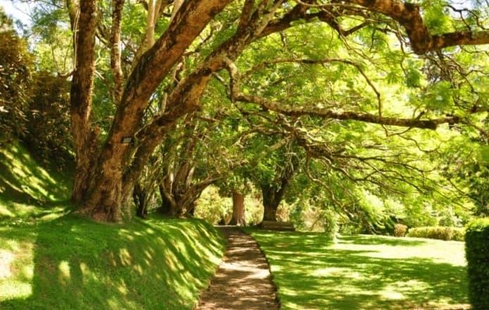حديقة هاكغالا النباتية من اهم الاماكن السياحية في نوراليا