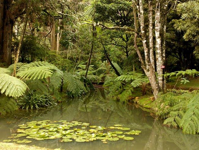 حديقة هاكغالا النباتية