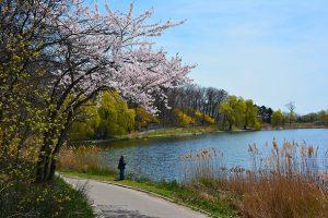 منتزه تورنتو هاي بارك