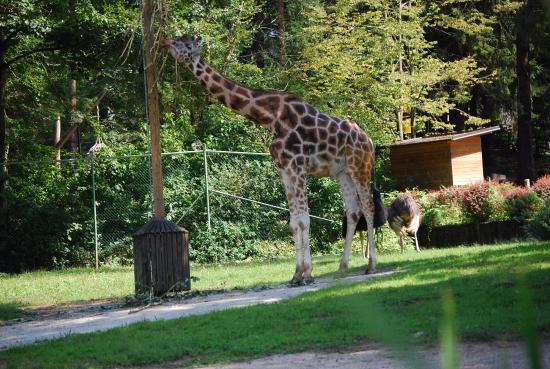 حديقة الحيوانات في ليوبليانا من افضل حدائق ليوبليانا سلوفينيا