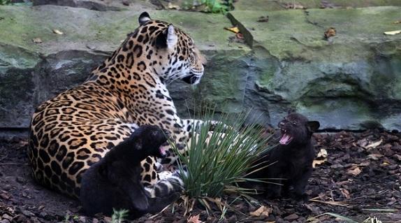 حديقة حيوانات ارتيس من اجمل حدائق امستردام