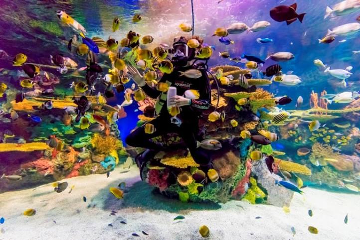 حوض السمك ريبلي