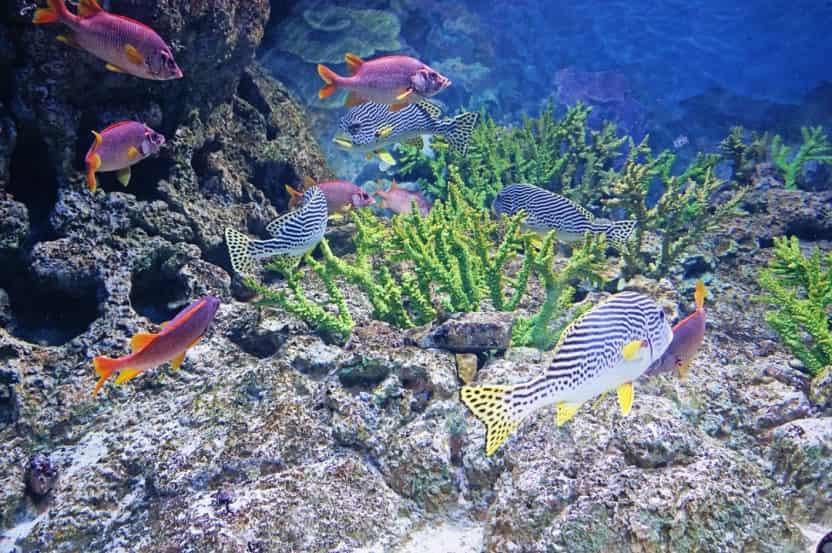 حوض أسماك أكواريوم S.E.A بسنغافورة