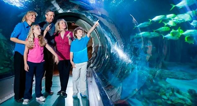 النفق في أكواريوم الحياة البحرية