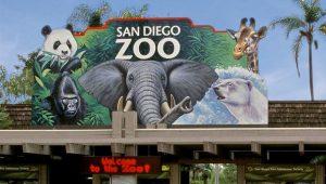 تعتبر حديقة حيوانات سان دييغو من اجمل الاماكن السياحية في سان دييغو امريكا