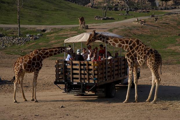 حديقة حيوانات سان دييغو سفاري بارك