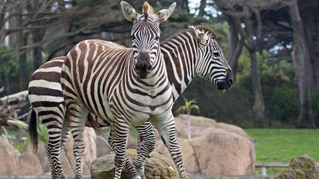 حديقة حيوانات سان فرانسيسكو
